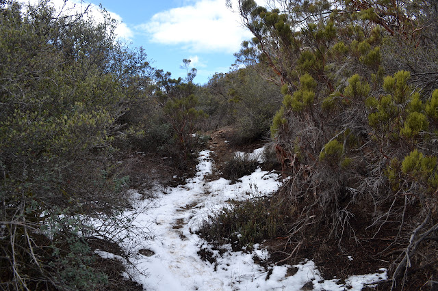snow covered use trail