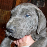 Stella @ 6 weeks