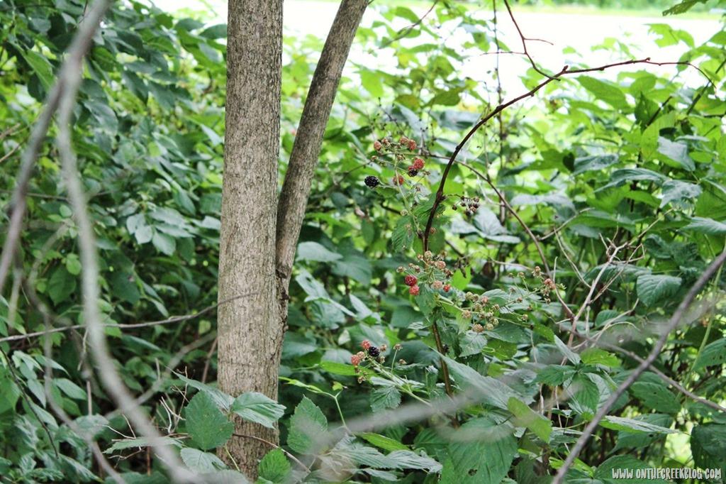 [blackberries1%5B8%5D]