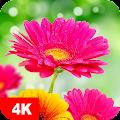 Flower Wallpapers 4K APK