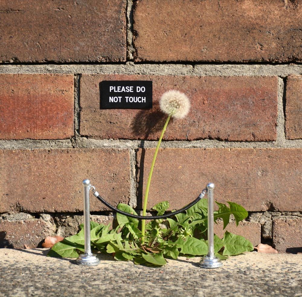 michael-pederson-street-art-10