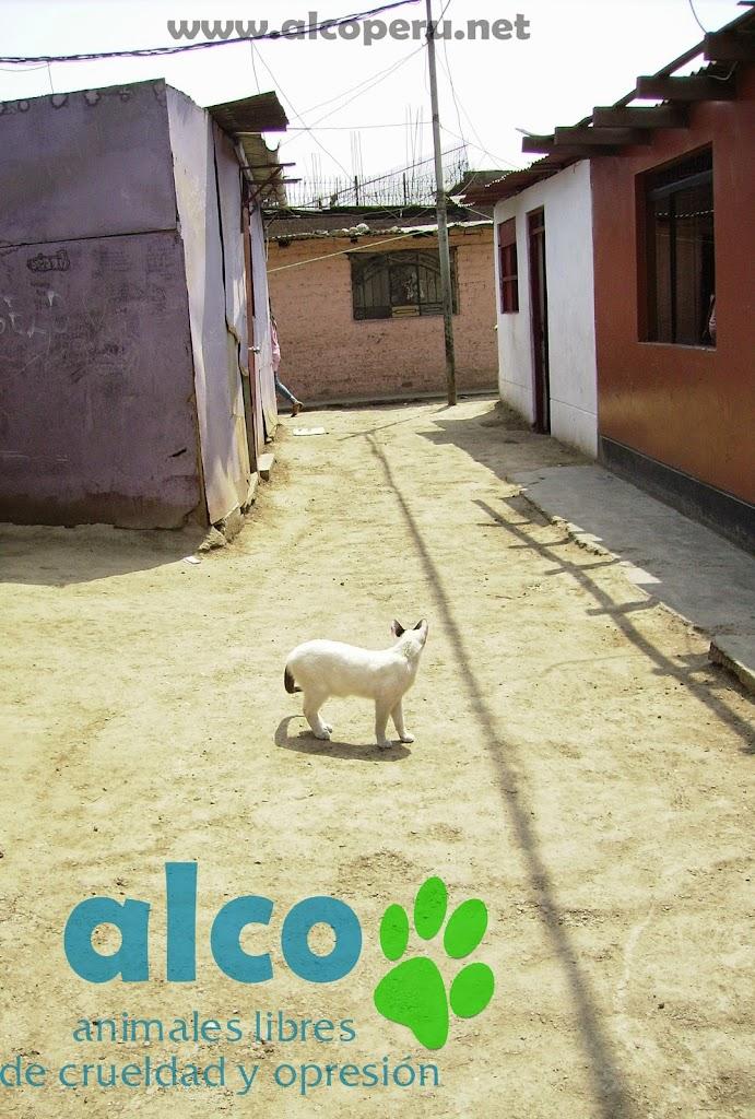 Campaña de asistencia en Mangomarca SJL (22)