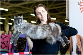 cats-show-25-03-2012-fife-spb-www.coonplanet.ru-040.jpg