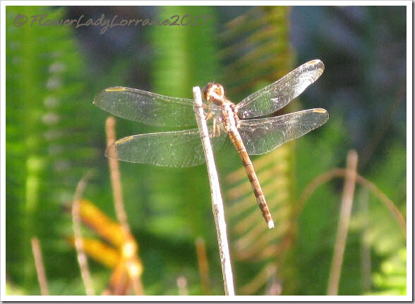 12-25-dragonfly
