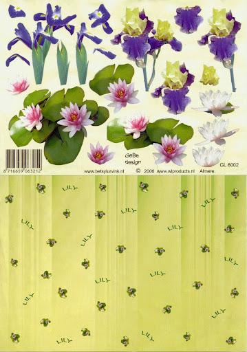 GL 6002 Betsy Lurvink-bloemen+achtergrond.jpg