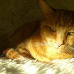20121027-01-sven-sun.jpg
