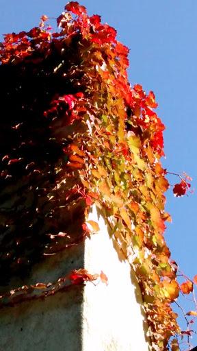 Outono em Cachoeira