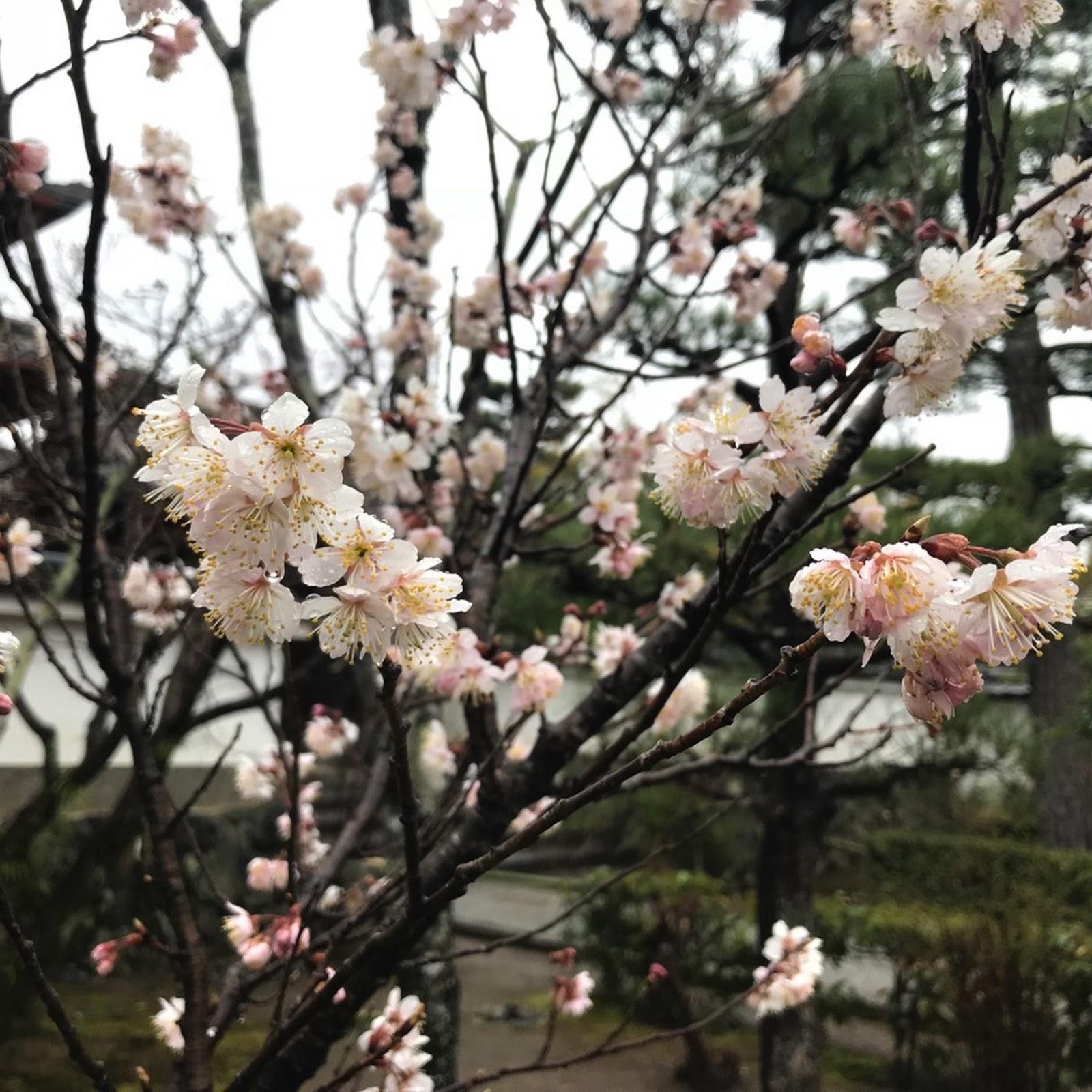 老娘遊記 2018 (06 – 16 March) @ 關西 Day 3– 嵐山(2)