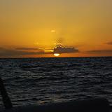 Sunset Cattrip