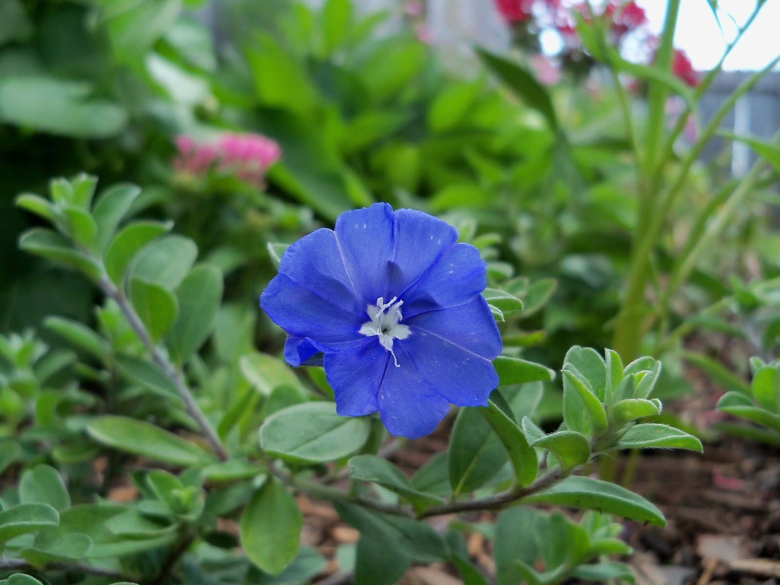 Gardening 2010, Part Two - 101_2669.JPG
