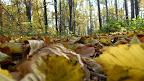 Konkurs fotograficzny Barwy Jesieni