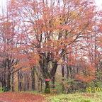krim jesen 2010 005.jpg