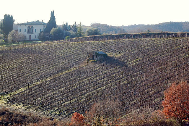 Brunello vineyard in January