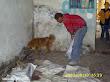 1era visita asistencia animales damnificados terremoto  Pisco 2007 (21)