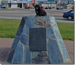 Skruffy in Dawson Creek