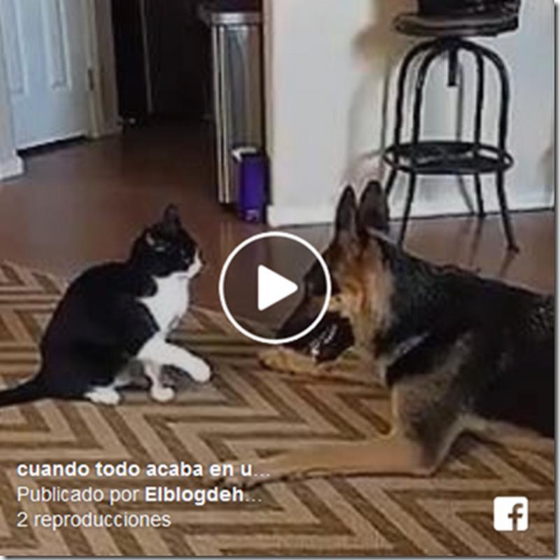 Video humor el gato que ataca al perro