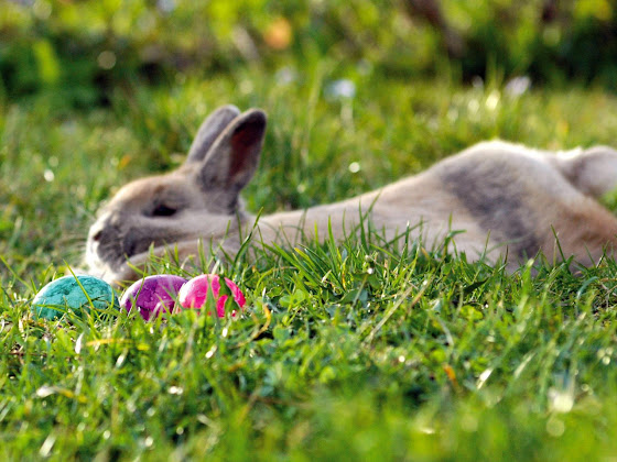 Uskrs besplatne pozadine za desktop 1280x960 slike čestitke blagdani jaja zec free download Happy Easter