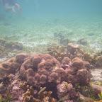 Corales en San Bernardo