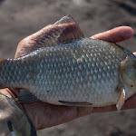 20150704_Fishing_Virlia_018.jpg