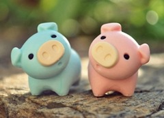 Pig-00002