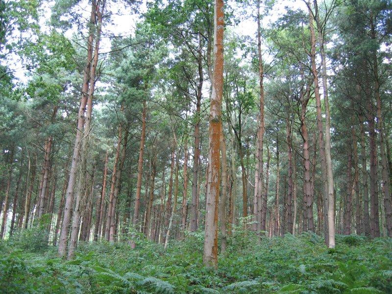 tilgate wood