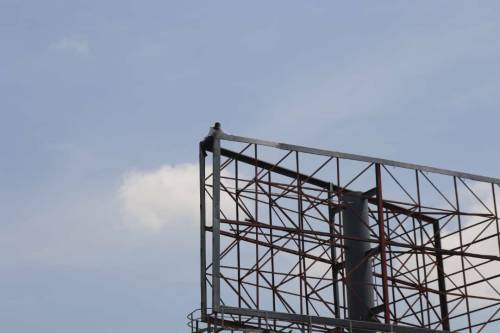 Police arrest man who climbed billboard in Adamawa to protest against President Buhari