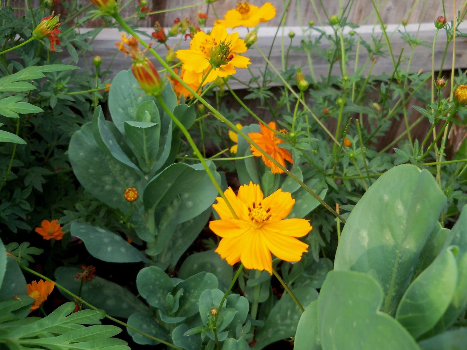 Gardening 2011 - 100_8904.JPG