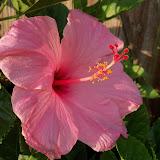 Gardening 2012 - 115_1750.JPG