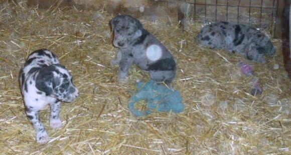 Gretta & Cobalt Blues 3/24/12 litter - SAM_3361.JPG