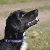 Survival voor Baas en Hond 2012 - DSC_0206.JPG