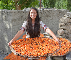 Dried appricots in Hunza valley