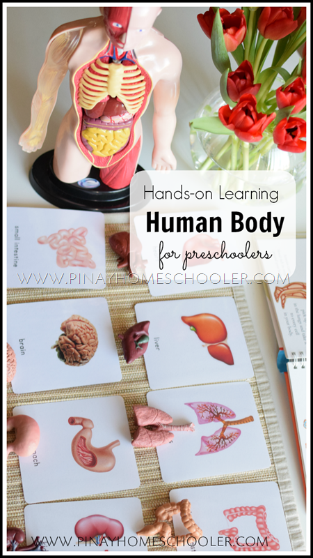 Hands-on Learning on the Human Body for Preschoolers