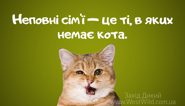Котики приколи