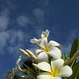 Hawaii Day 2 - 100_6508.JPG