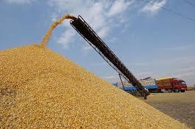 Algérie:Baisse de la production céréalière en 2016