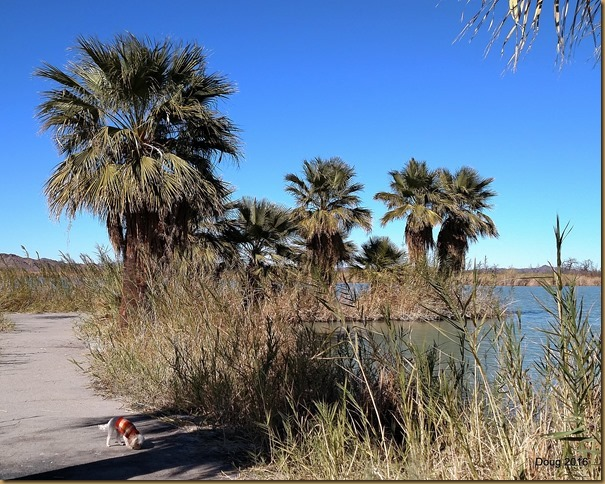 Palm Tree Peninsula at Mittry Lake