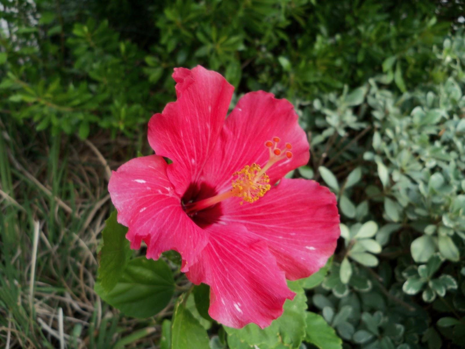 Gardening 2011 - 100_9191.JPG