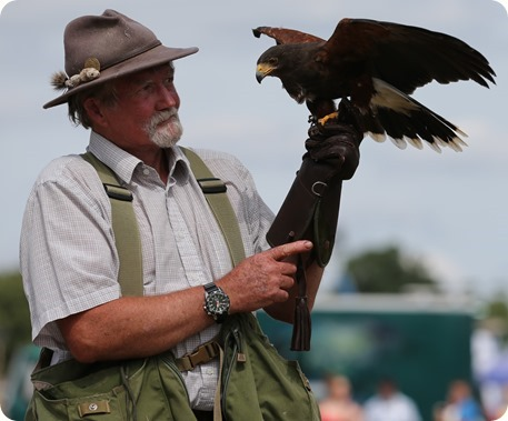 Falconry demonstration by Terry Large Falconry Displays