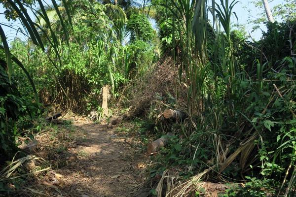 Tayrona Jungle
