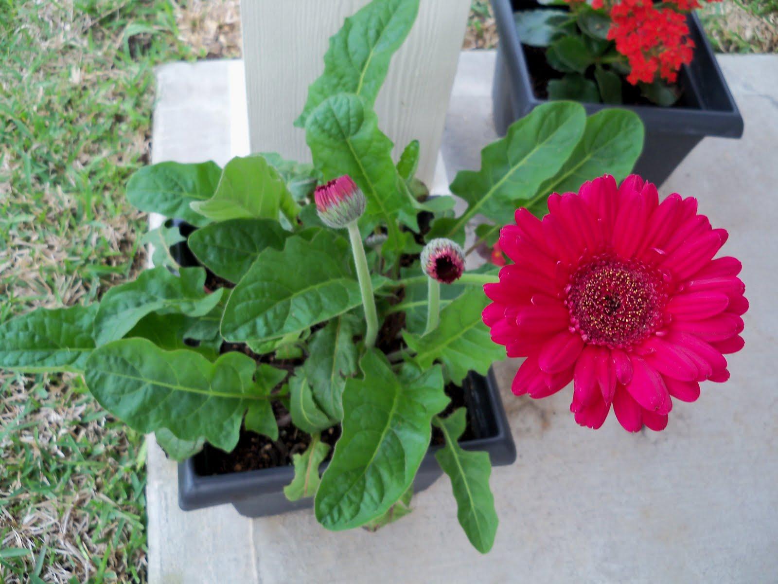 Gardening 2010 - 101_0887.JPG