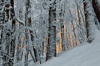 LUMIERE !   Le soleil pointe dans la forêt du Risoux !