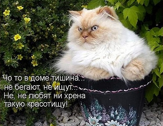 1411716336_kotomatricy-23
