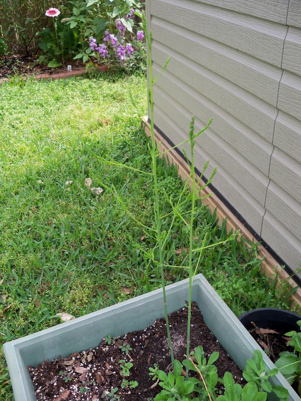 Gardening 2013 - 115_6049.JPG