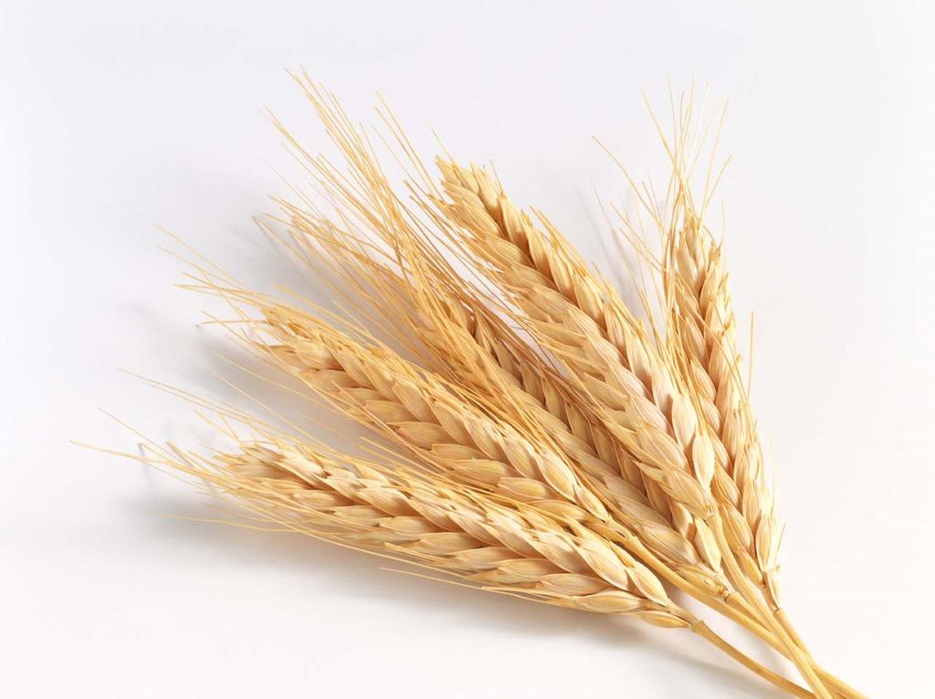 [wheat+grain-3%5B2%5D]
