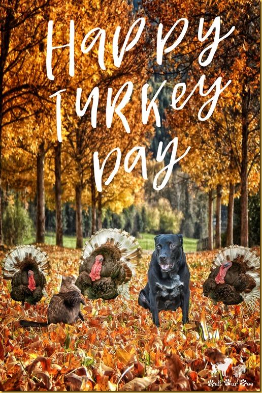 Thanksgiving Matt & Matilda Turkey Day(©Bell Fur Zoo)