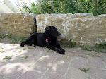 Unser Hund genießt den kühlen Schatten