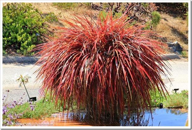 160813_UCSC_Arboretum_216