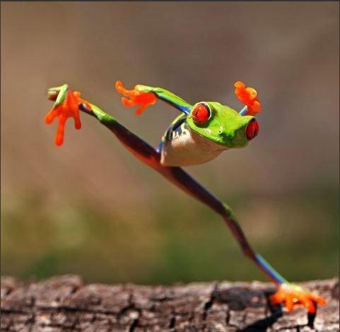 [frog1%5B3%5D]