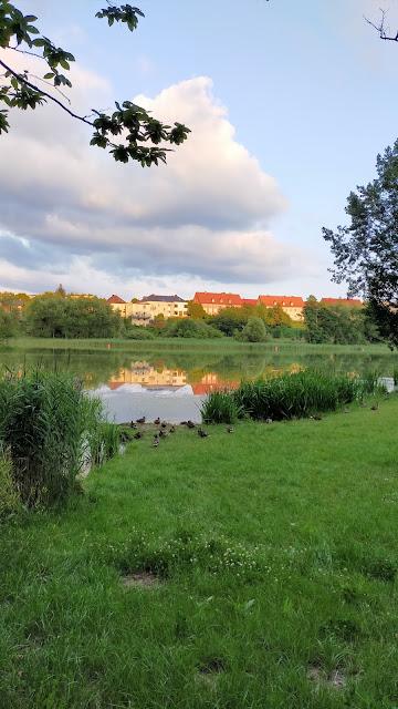 kaczki na brzegu jeziora przy zachodzie słońca