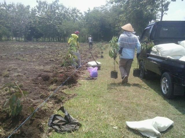Para pekerja melakukan penanaman bibit tanaman buah buahan di Wanadesa Slayur Caturharjo